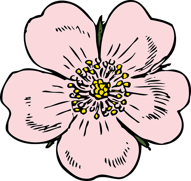 640x607 Collection Of Free Flower Drawing Apple Blossom Download On Ui Ex