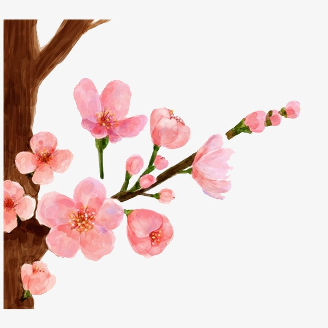 650x650 drawing peach, peach clipart, peach blossom png image and clipart