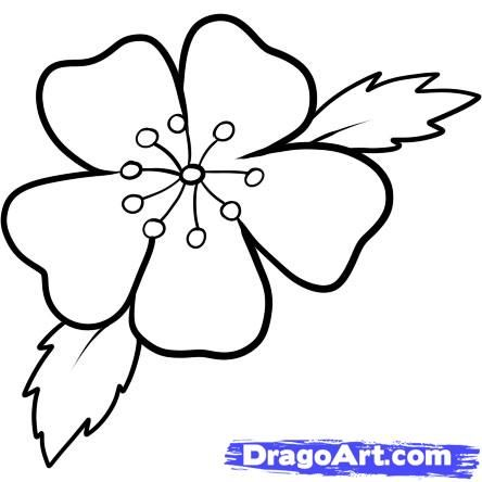 444x444 Easy To Draw Cherry Blossoms How To Draw A Cherry Blossom Step