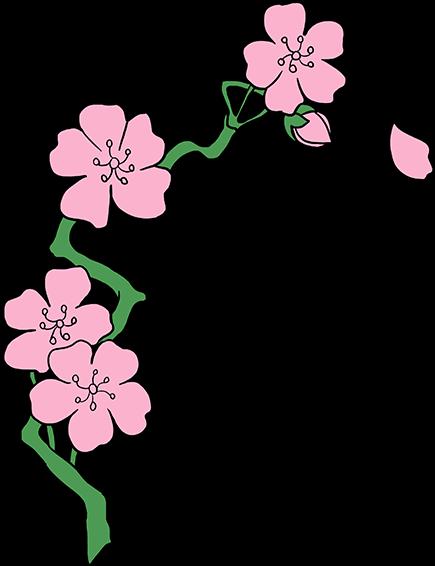435x566 Hd Cherry Blossom Flower Drawing
