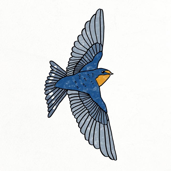708x708 bird drawing bird plus bird