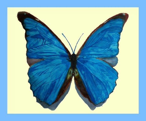 600x497 Blue Butterfly Drawings