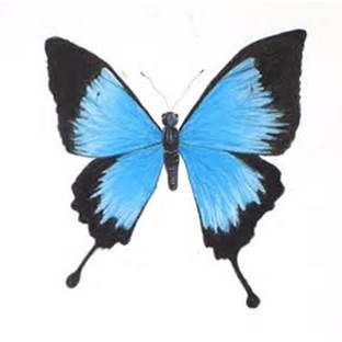 312x312 Blue Butterfly Pencil Drawings Journal