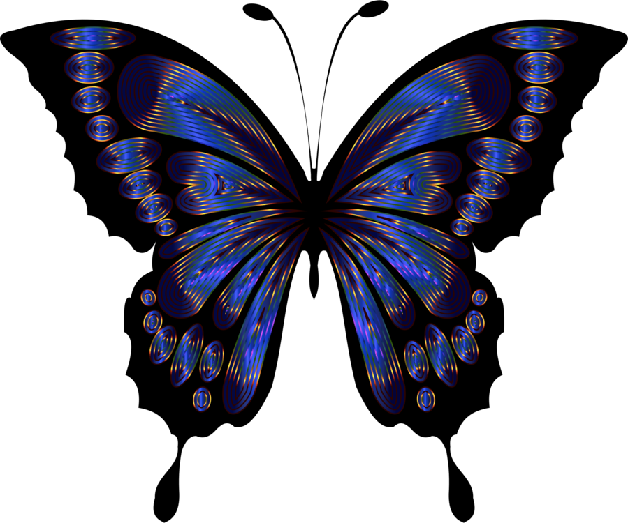 899x750 Butterfly Blue Insect Drawing Purple Cc0