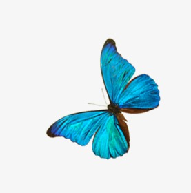277x280 Drawing Butterfly, Butterfly Clipart, Watercolor, Blue Png Image