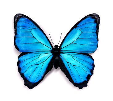 366x328 How To Draw Butterflies Art Lessons Butterfly Drawing, Blue