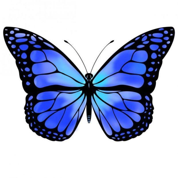 620x620 blue butterfly a piece of me butterfly, monarch butterfly