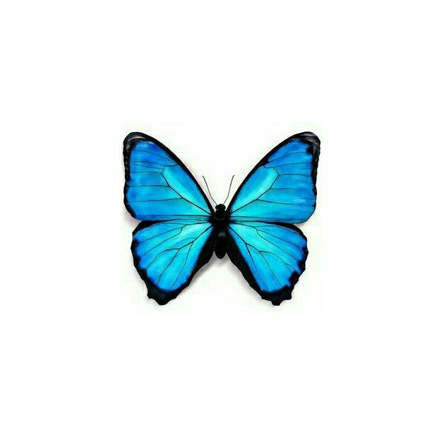 629x613 Ink Butterfly Drawing, Blue