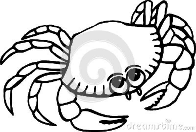 Blue Crab Drawing