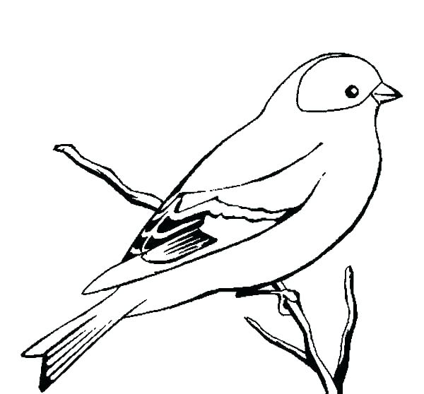 600x558 blue bird coloring pages blue bird drawing at free for personal