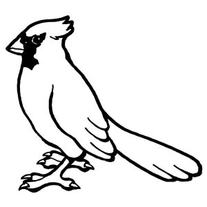300x300 bird coloring pages blue jay best blue jay bird drawing