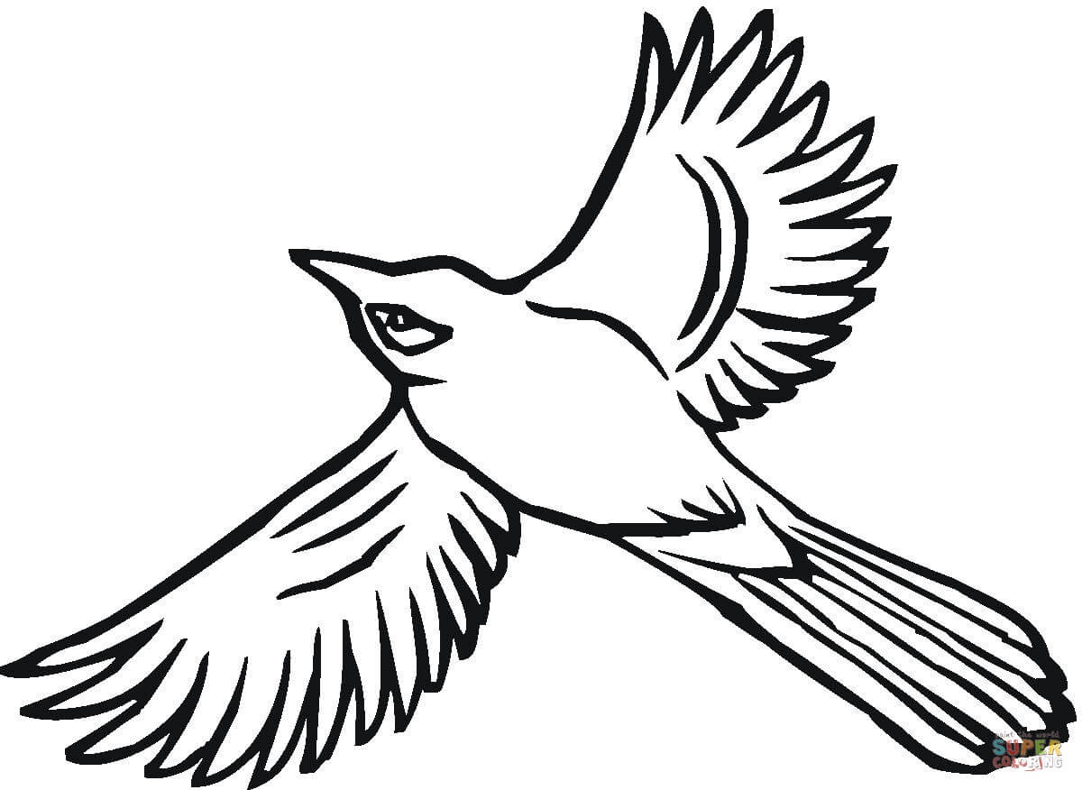 Blue Jay Drawing Free Download Best Blue Jay Drawing On