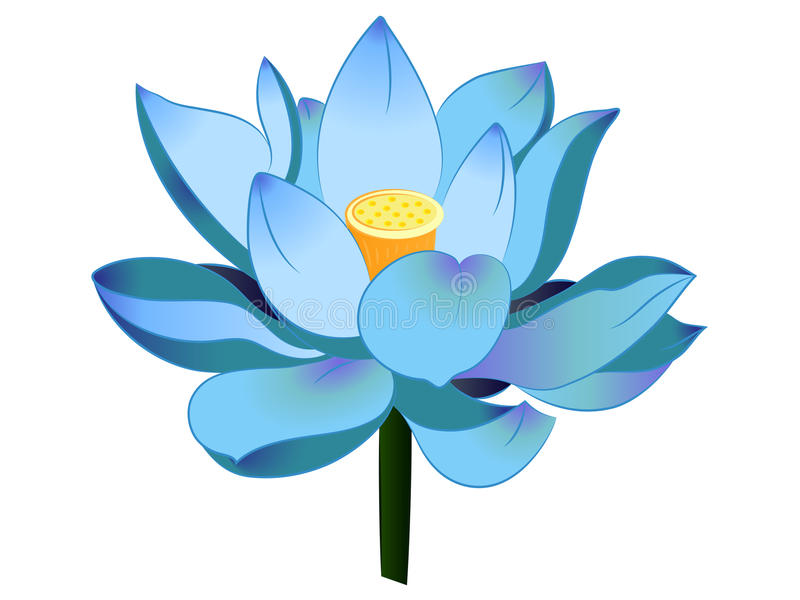 800x600 Flower Clip Art Blue Lotus