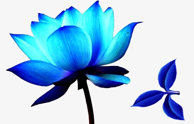 650x415 Flowers, Ice Blue, Lotus Png Image And Clipart For Free Download