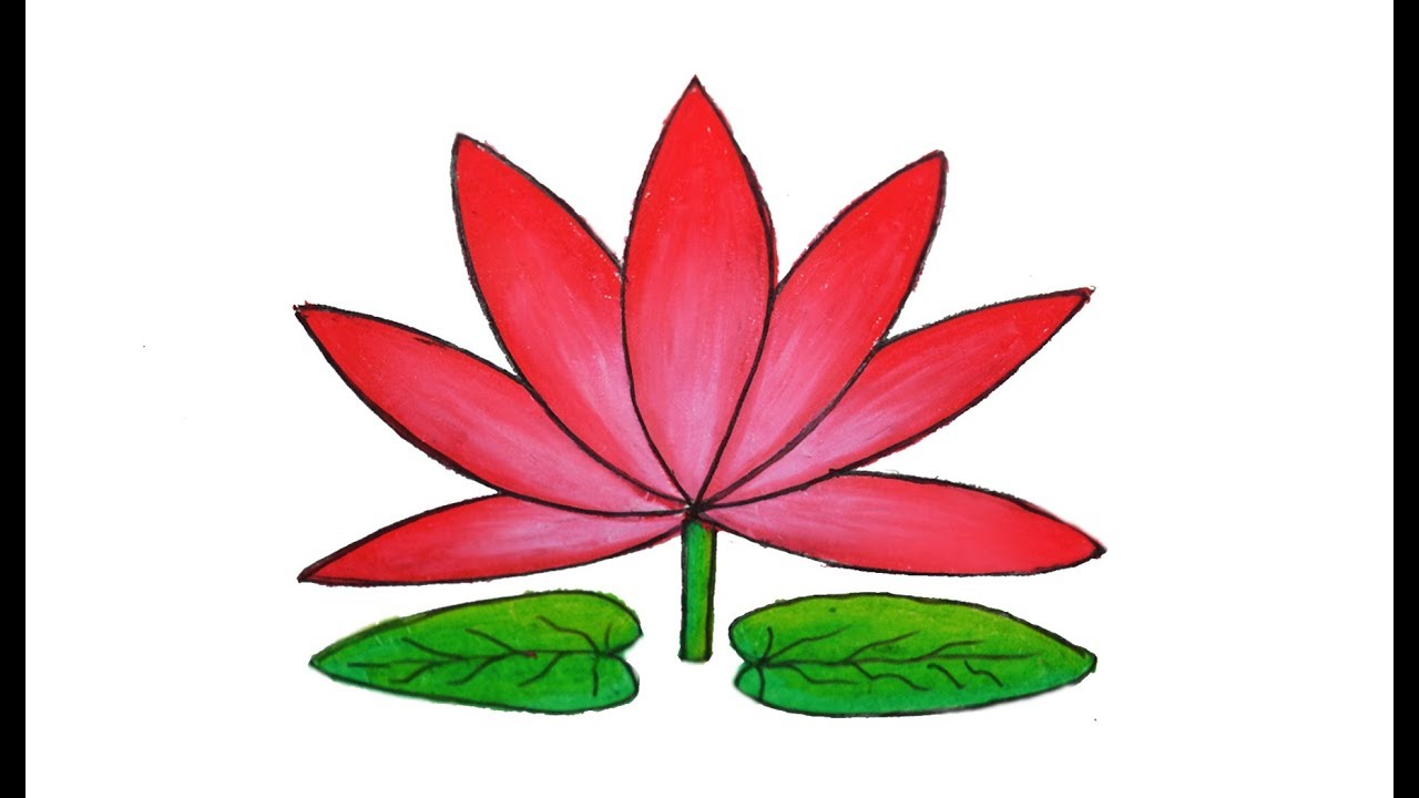 1280x720 How To Draw Water Lily Easy And Simple Shapla Ful Art