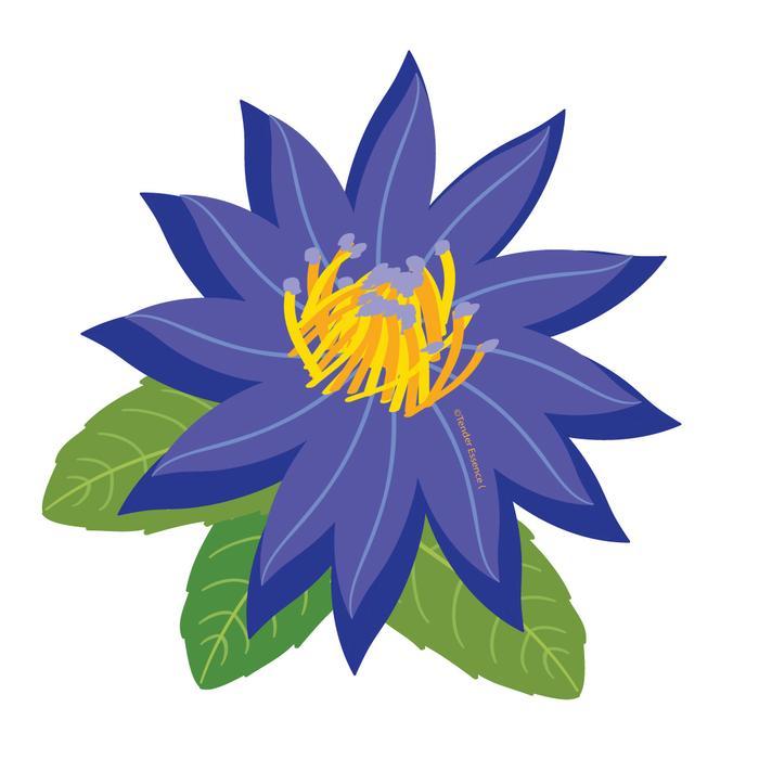 700x700 Blue Lotus Absolute Oil