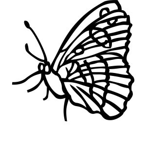 300x300 blue morpho butterfly coloring sheet new blue morpho butterfly