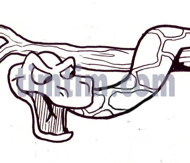 612x525 free drawing of a tree snake bw from the category reptiles