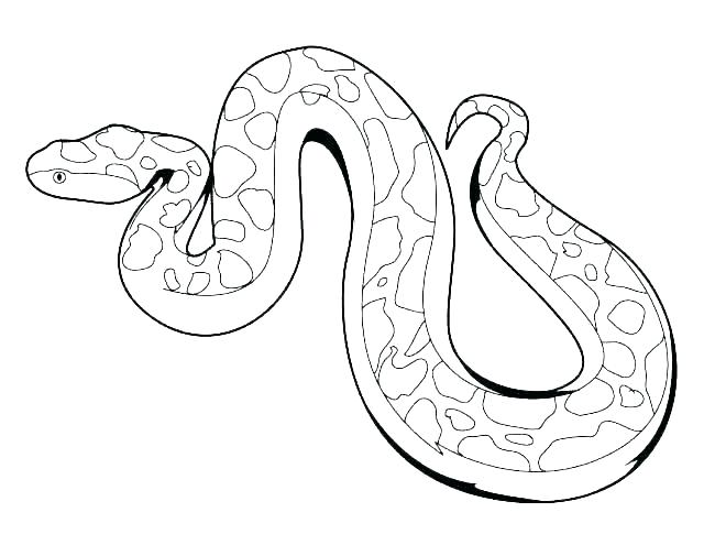 640x495 anaconda coloring pages anaconda coloring pages boa constrictor