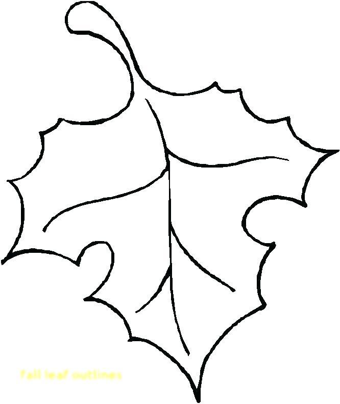 666x791 leaf outlines outlines of leaves on a white background leaf