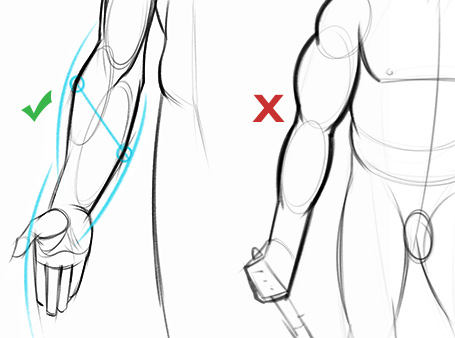 455x338 How To Draw Forearms Arm Anatomy For Artists Proko