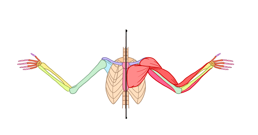 850x446 How To Draw Angel Wings