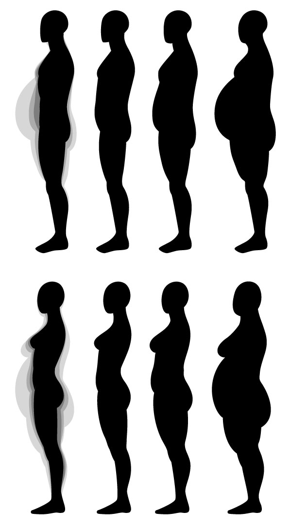 597x1087 Human Anatomy Fundamentals Muscles And Other Body Mass