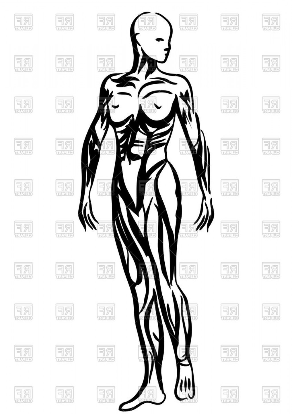 1018x1440 Outlines Of Human Body Woman Anatomy Vector Clipart Soidergi