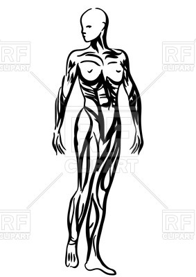 283x400 Outlines Of Human Body