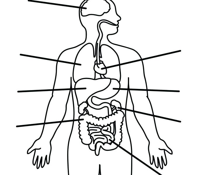 image regarding Printable Body Outline referred to as System Drawing Template Free of charge down load most straightforward Entire body Drawing