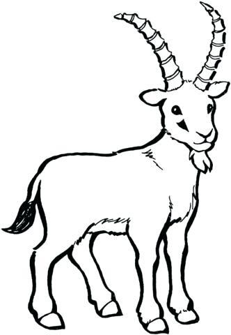 332x480 Wild Goat Coloring
