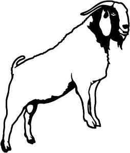254x300 Boer Goat Decal Stoa