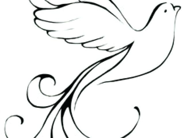 640x480 How To Draw An Easy Dove White Dove Easy Draw X Free Clip Art