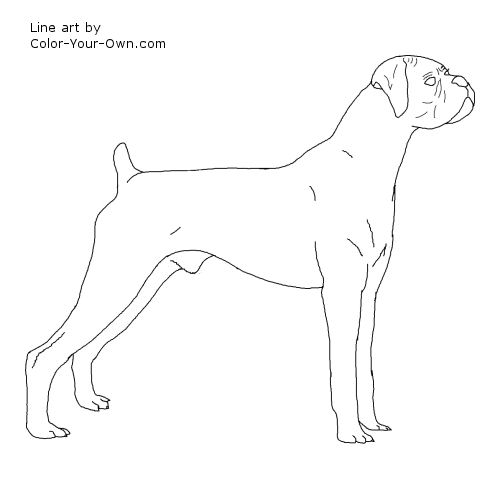 500x500 boxer dog coloring pages boxer dog coloring