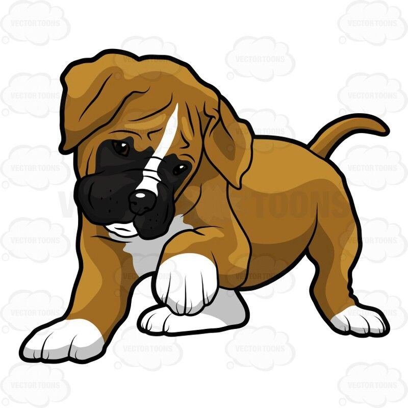 800x800 boxer puppy clipart cute dog pictures, boxer puppies, boxer
