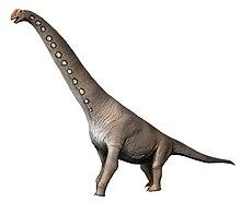 220x186 Brachiosaurus