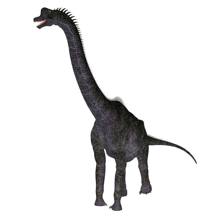 900x900 Brachiosaurus Dinosaur, White Photograph