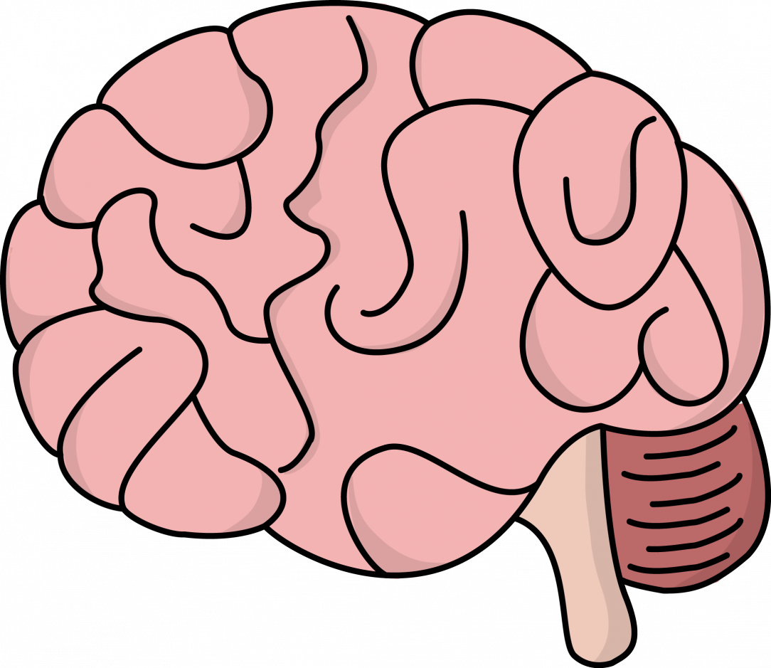 Brain Drawing With Labels | Free download on ClipArtMag