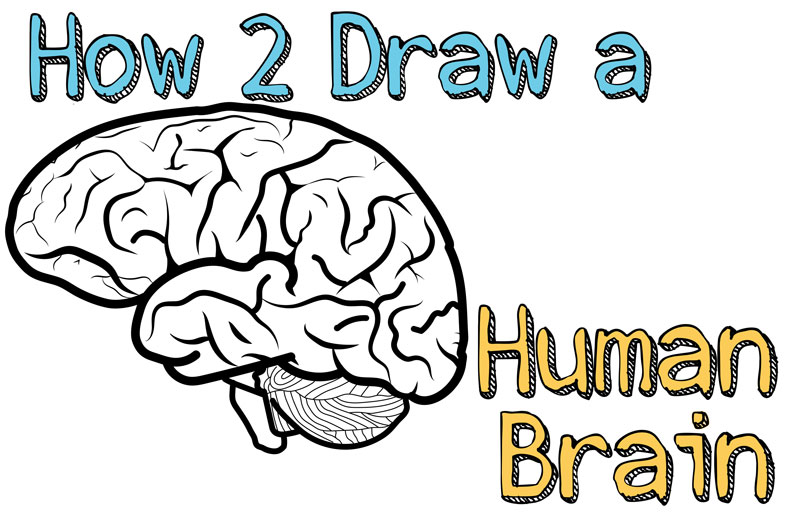 Brain Pencil Drawing   Free download on ClipArtMag