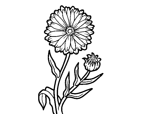 600x470 Collection Of Free Bouquet Drawing Marigold Download On Ui Ex