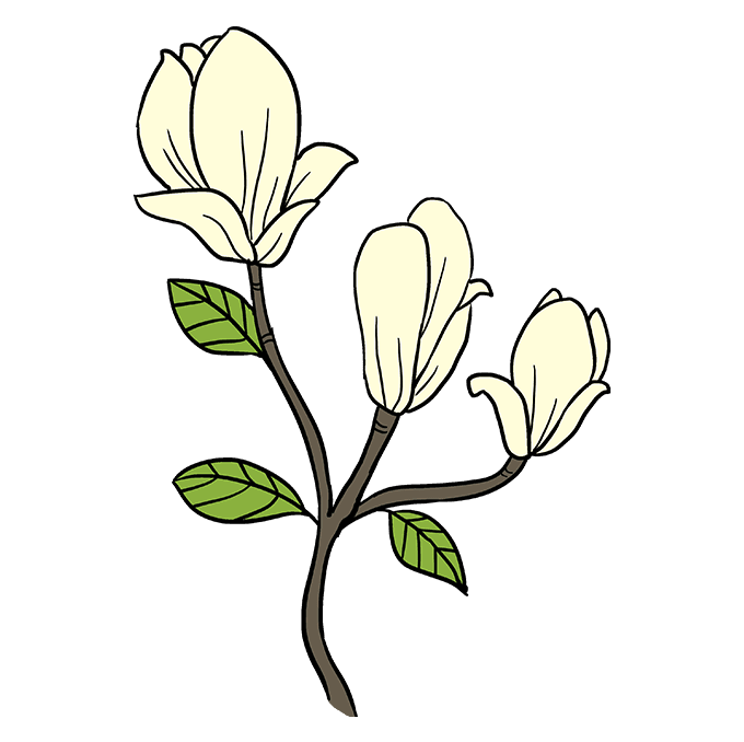 680x678 How To Draw Magnolia Flowers