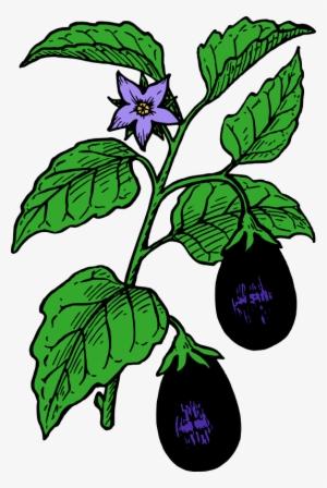 300x448 eggplant png, transparent eggplant png image free download