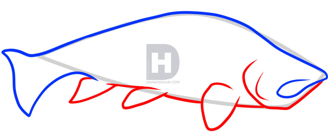 1080x435 how to draw a trout, trout fish, step