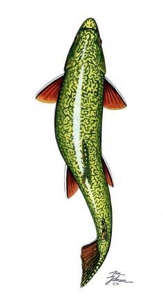 236x431 delightful trout images in fishing, gone fishing, trout