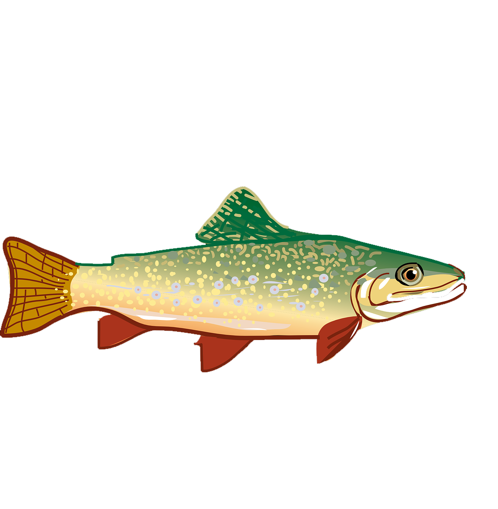1024x1045 Collection Of Free Fish Vector Brown Trout Download On Ui Ex