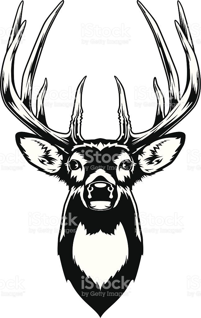 648x1024 Black And White Illustration Of A White Tailed Deer Buck's Head