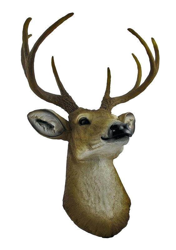 564x800 Buck Deer Drawing Fine Art Print Head Point Bust Wall Hanging