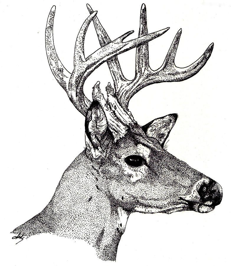 783x900 Ten Point Buck Drawing