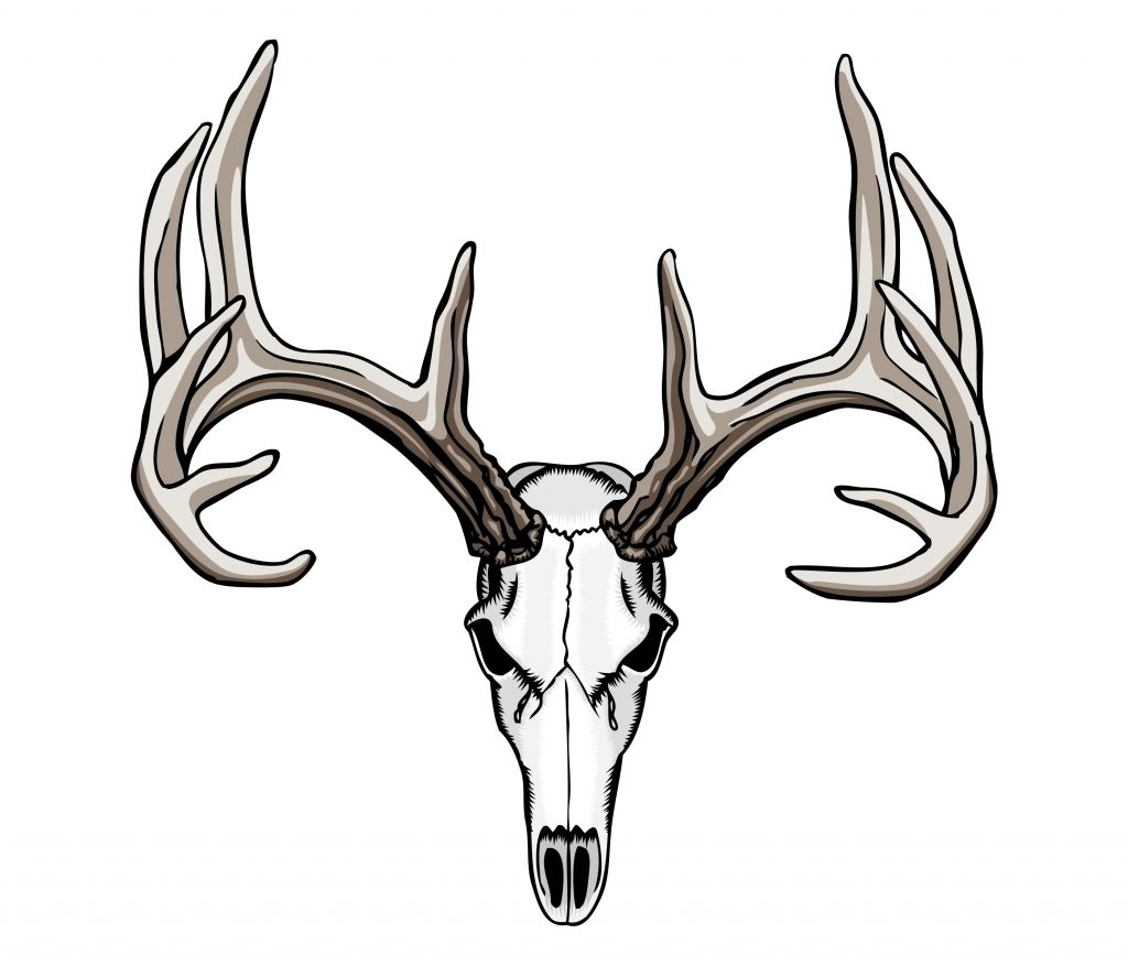 1024x877 Tribal Deer Antler Tattoos Ideas About Deer Skull Tattoos