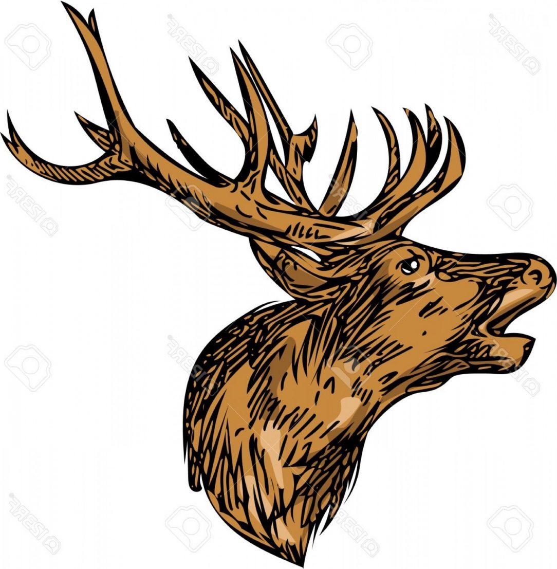 1084x1107 Superlative Buck Drawing Big Outline Buckbeak Carmi Chaelinn